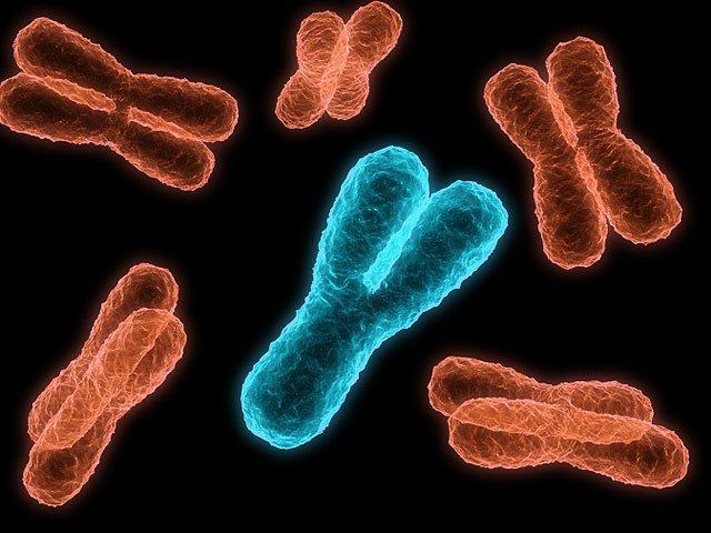 До втрати чоловічої Y-хромосоми може призвести паління