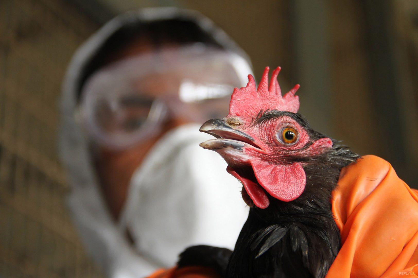 Угроза птичьего гриппа в Канаде