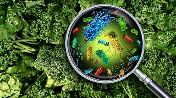 Летние пищевые отравления: чем опасны и как их избежать